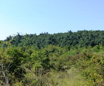 Vadcseresnyés a Kovácsi-erdőföldek felől